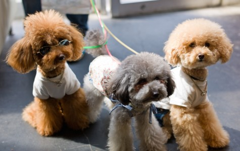 Ending the Cruelty of the Pet Industry