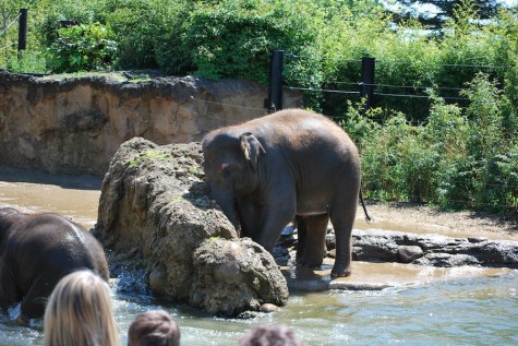 Elephant captive at zoo