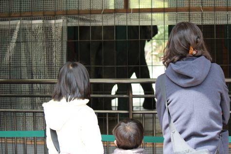 A family peers in to see the elephant.