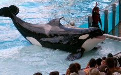 How We Can End Orca Captivity