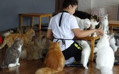 Animal Cafes: What you should and shouldn't find