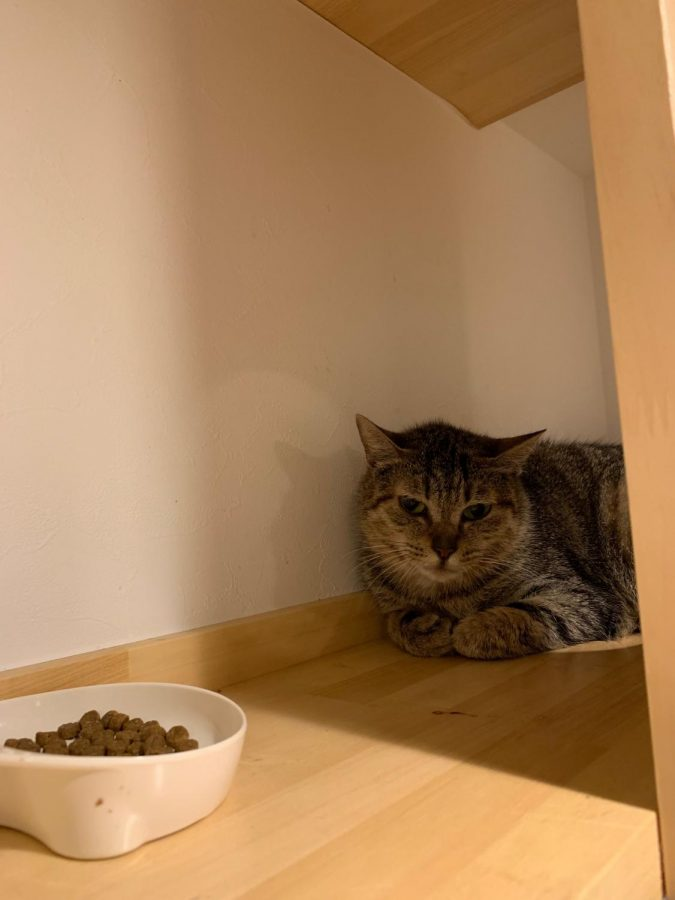 A cat sits in one of the cafe's hiding spots, with a bowl of food nearby.